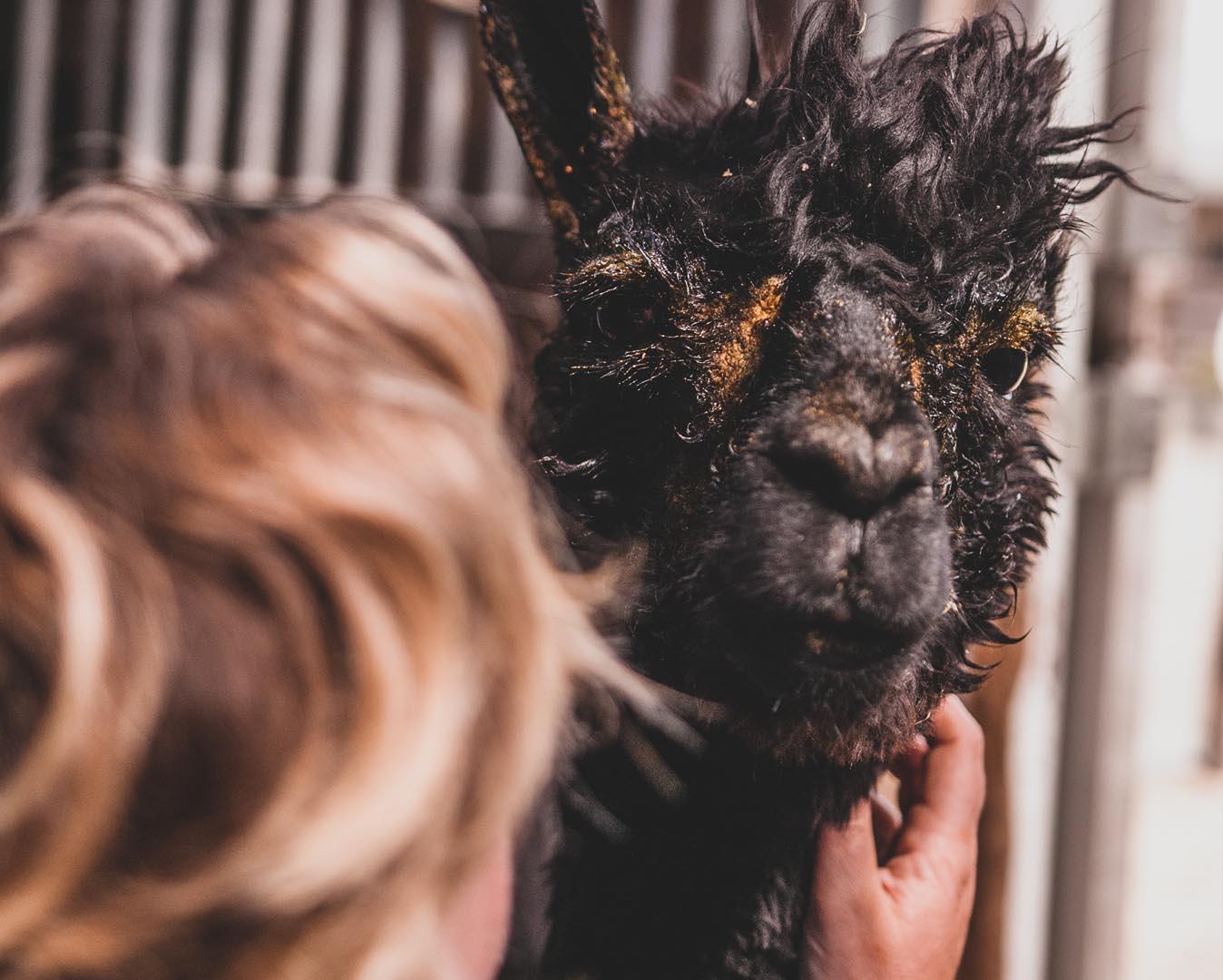 alpaca verzorging